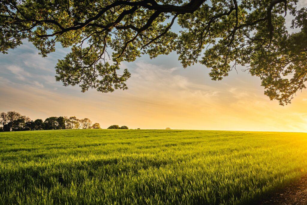 Farm & Tree