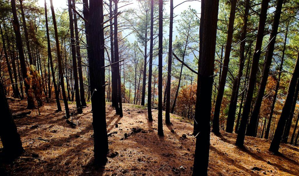 Burned forest.